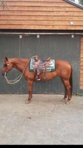 2007 Quarter Horse Mare