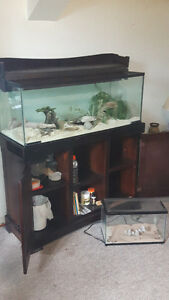 Custom Wood Stand, Glass Tank + 4 female Leopard Geckos and More