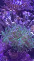 Corals and coral frags