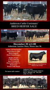 Commercial Bred Heifer Sale