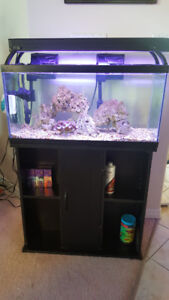 30 Gallon Fish Tank