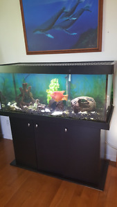 Beautiful 78 gallons Aquarium, complete kit