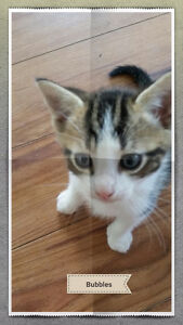 2 kittens need new home
