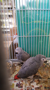 Birds Inc is doing a order and we have the following avaliable