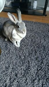 Cute little bunny in need of new family just in time for Easter!