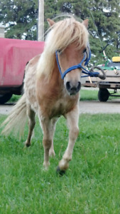 2 year old pony filly.