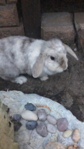 Rabbit for rehoming