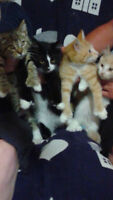 Cute kittens to go to loving homes