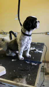 Looking For Work In Dog Grooming