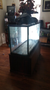 Large terrarium and stand $120 obo