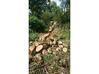 FREE Tree Maintenance or Felling Available