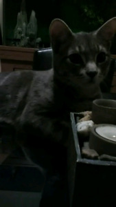 Free 1 year old male cat