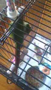 Green cheek conures + cage for sale