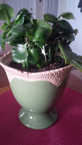 New Green Flower Pot - for sale ! Kitchener / Waterloo Kitchener Area image 2