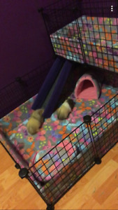 Bunny/guina pig cage