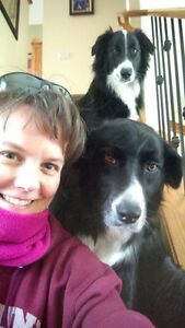 Professional Dog Walking Services (North of Calgary)