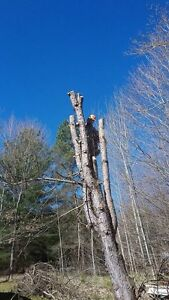 Quick acting Tree Service and Storm clean up Peterborough Peterborough Area image 5