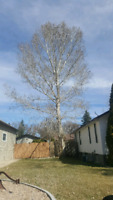 Wanted! I need tree removed for Reasonable Price