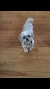 Dog  groomer in southend Halifax