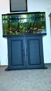 36-40 gallon tank with stand
