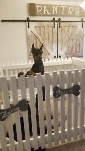 In home doggy play area