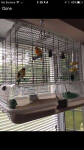 Canary (canaries) and cage