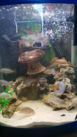 Full tank set up including fish.