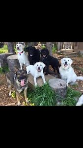 TAILS ON TRAILS-GROUP DOG WALKING-$16.00-2hr off leash