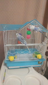 2 young fancy Budgies with cage. and everything