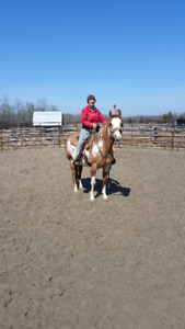 For Sale Reg. Overo Paint Mare