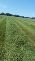 5x6 hay bales for sale mixed hay