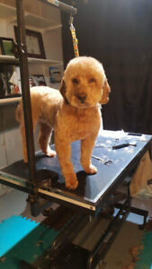 Booming dog grooming business for sale in Orleans