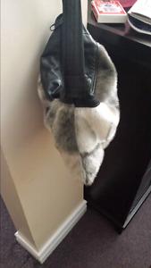 Seal Skin purse