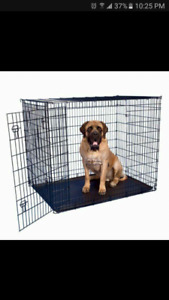 Looking for XL dog kennel/crate