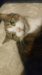 I am looking to rehome my cat