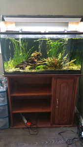 35 gal fish tank and stand