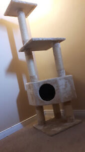 Kitten home and play
