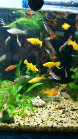 Variety of tropical fish and shrimps