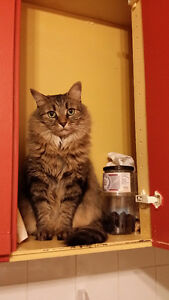 Lost cat - REWARD!! Dupont/Christie area