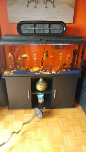 55 gallon fish tank with fish rocks filter stand