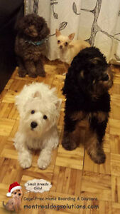 *HOLIDAYS FULL* CAGE-FREE BOARDING SMALL DOGS IN HOME OF TRAINER West Island Greater Montréal image 2
