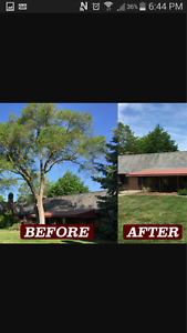 tree removal and trimming
