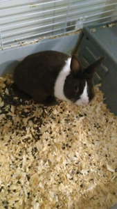 Cute bunny free to a good home