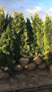 LARGE VARIETY OF TREES FOR SALE