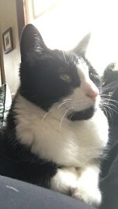 Lost: Black and White Cat