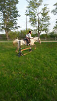 Awesome Pony for Part-Board - Trail Rides or Arena Jumper