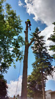Kawartha Lakes Tree Service:Tree Removal, Pruning, Stump Removal