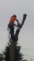 NATURE'S CHOICE TREE SERVICES 705-818-7669 CALL TODAY!