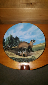 The Black Footed Ferret - Decorative Plate