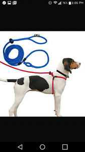 Anti-pull harness lead for large dog